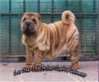 venta de perros en cordoba: